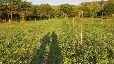olivos-familia-carroz