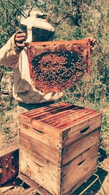 marco-con-miel