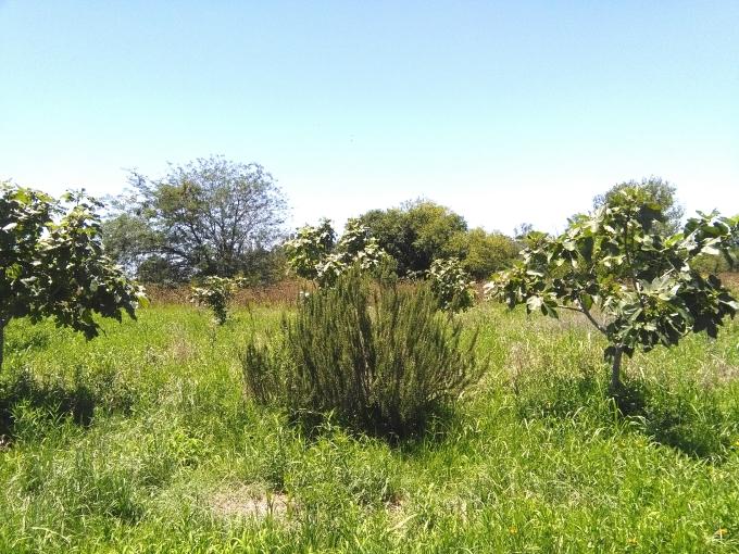 Aromaticas en el cultivo organico.jpg