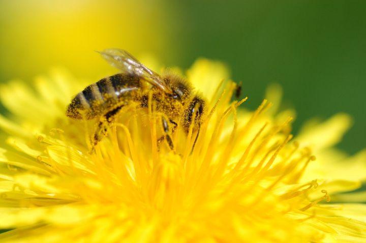 abeja miel.jpg
