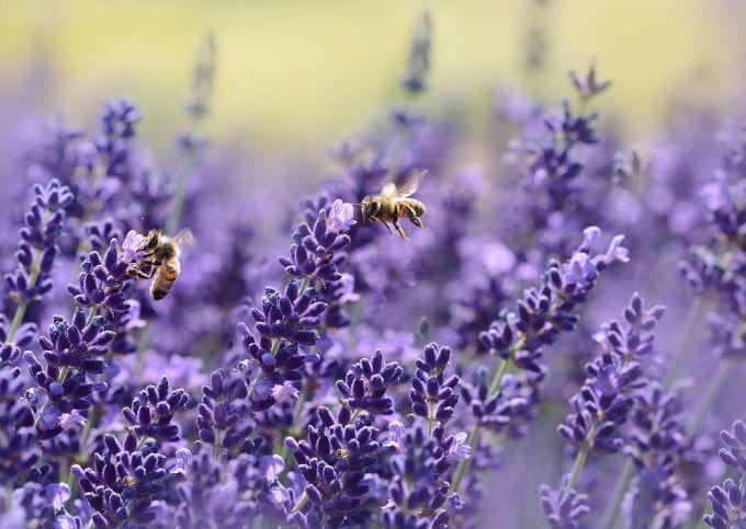 Abejas- flores-
