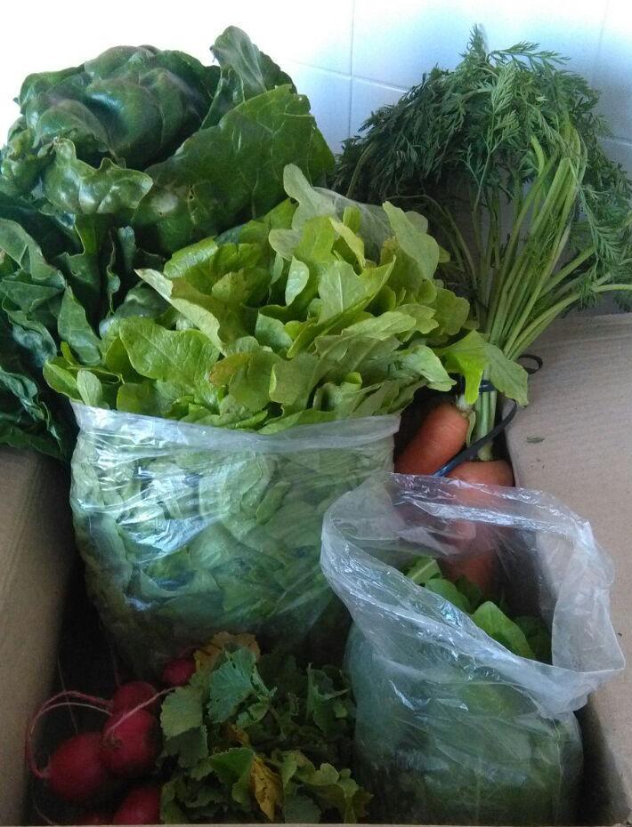 Caja de verduras orgánicas.