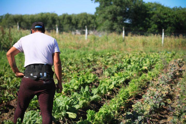 Producción de verduras orgánicas.
