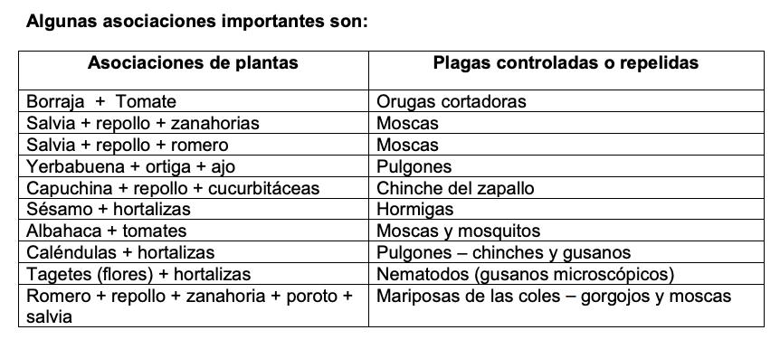 Asociación de cultivos para prevenir plagas.