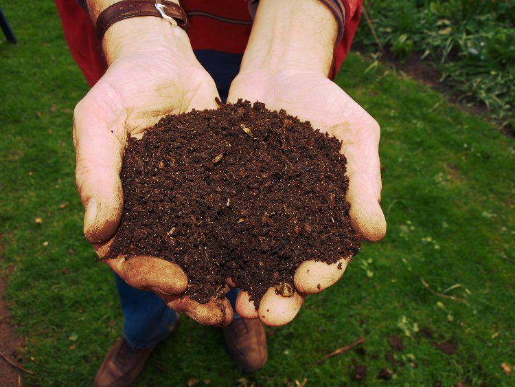 Compost listo para usar.