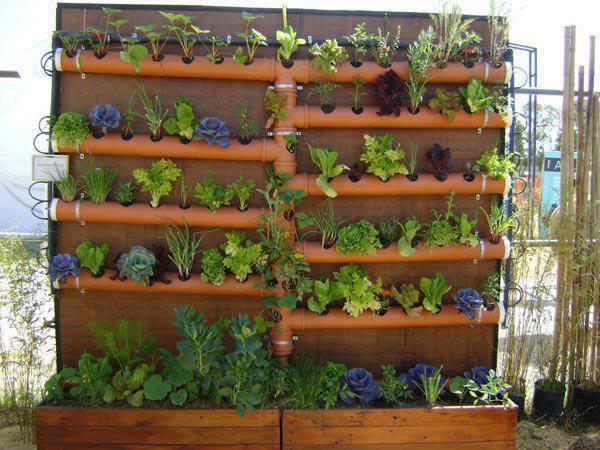 Huerta vertical con diversidad de plantas.