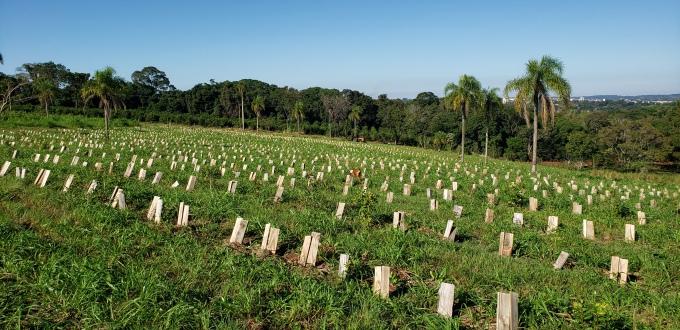 Plantaciones de yerba mate. Anna Park