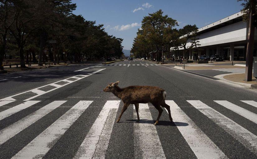 Ciervo en Nara, Japón durante el receso generado por el coronavirus.